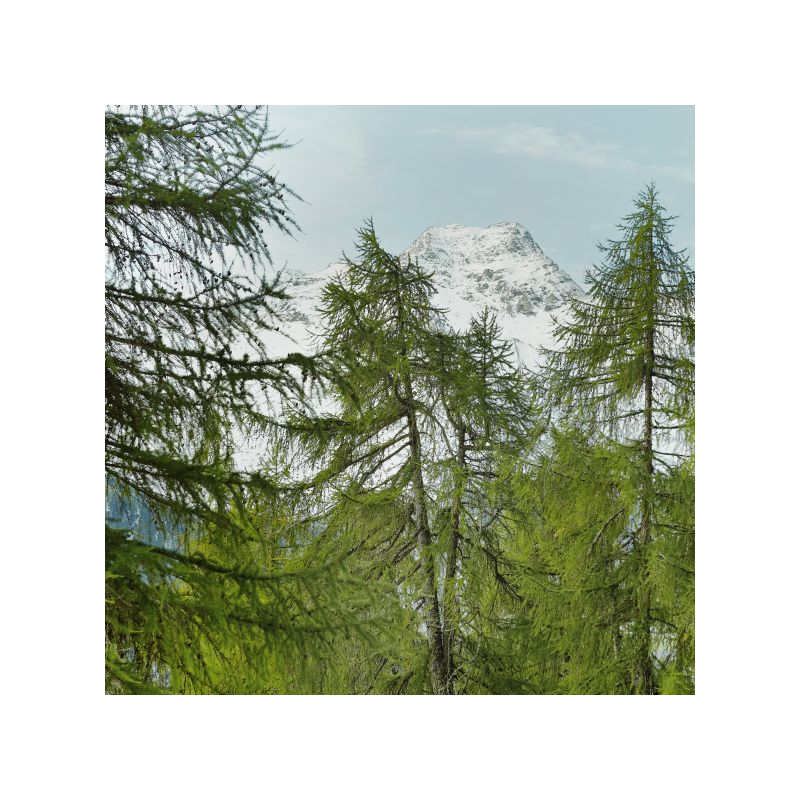 Victorinox - Swiss Army Forest - Eau de Toilette - 100ml