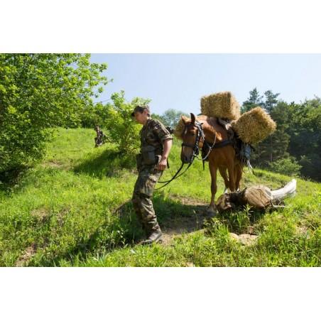 Trainsoldat führt Pferd mit Last im Gelände